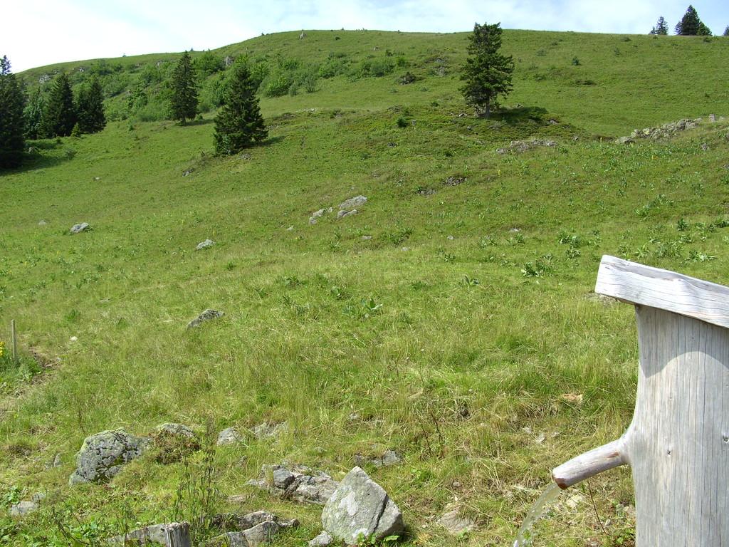 Viehweide am Baldenweger Buck   © Hartmut Hermanns