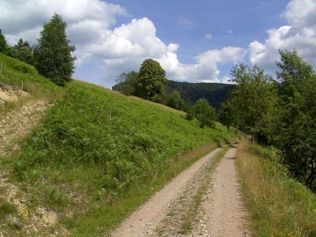 Auf dem Weg nach Schürberg   © Hartmut Hermanns