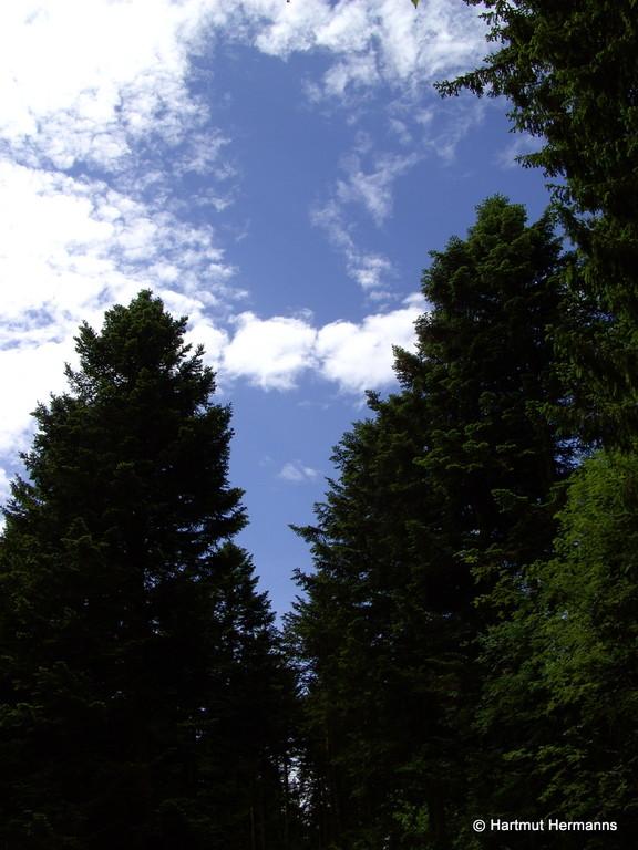 Waldeseinsamkeit am Köhlgarten    © Hartmut Hermanns