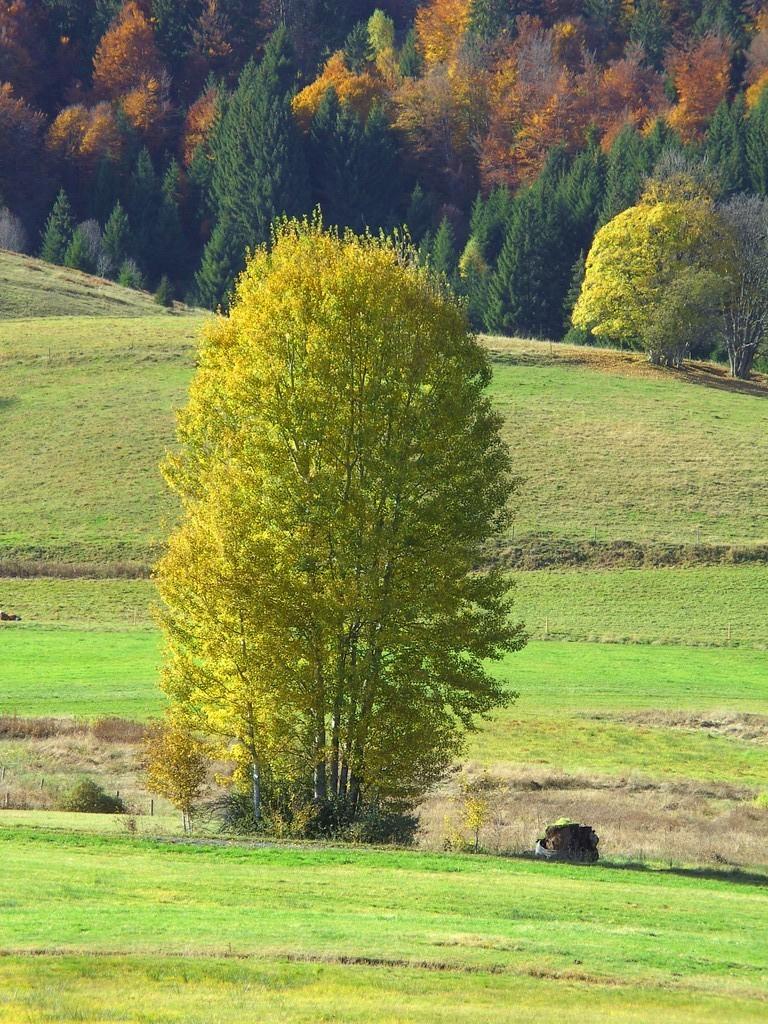 Herbst    © Hartmut Hermanns