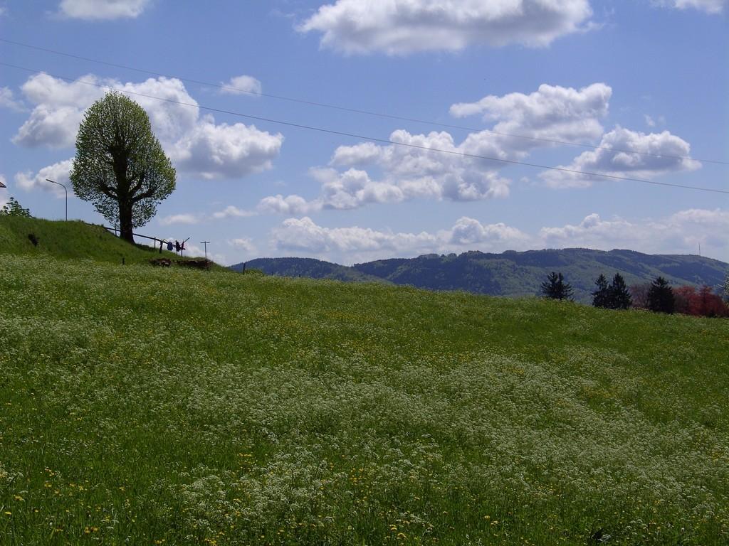 Auf der Schweigmatt - im Hintergrund der Hotzenwald  ©   Hartmut Hermanns