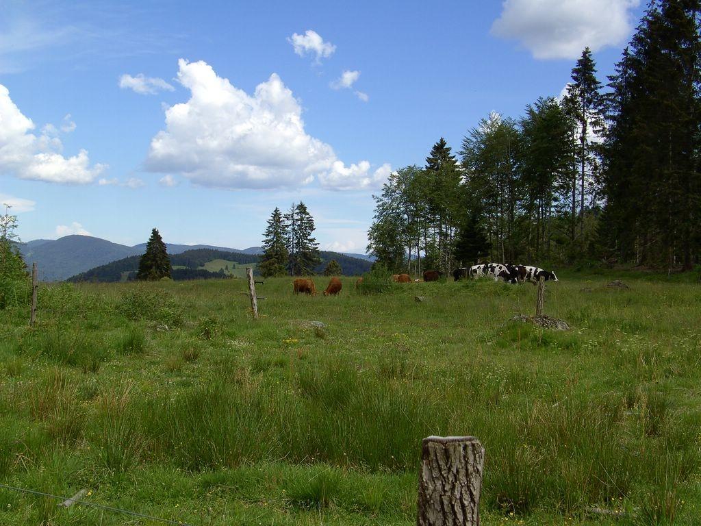 Viehweiden beim Nonnenmattweiher    © Hartmut Hermanns