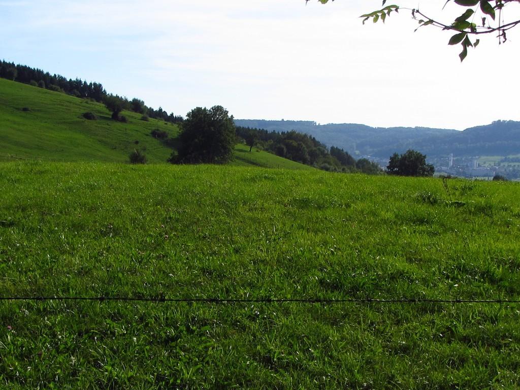 Weideland oberhalb von Kadelburg   © Hartmut Hermanns