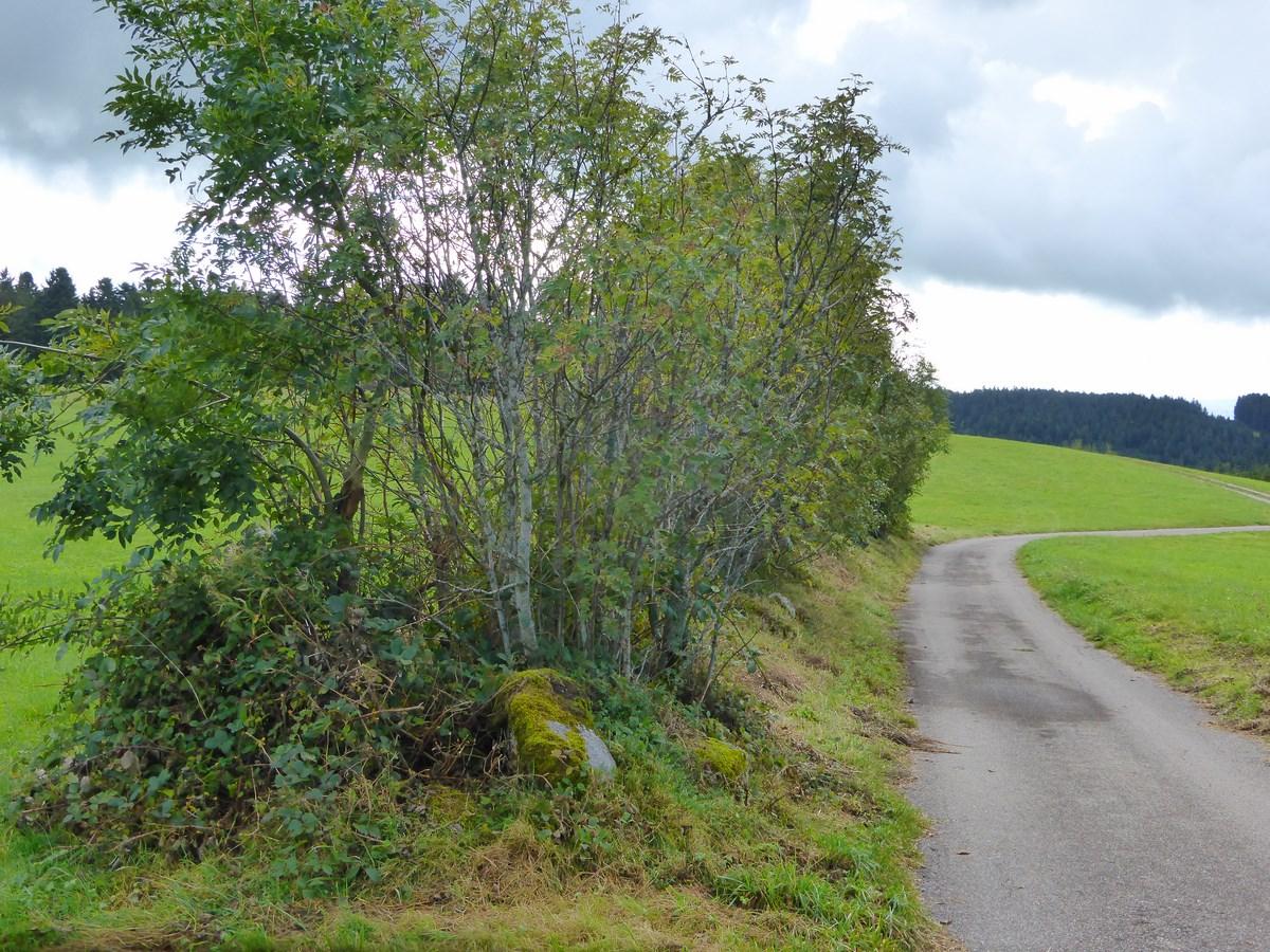 Wall am Weg nach Hierholz  © Hartmut Hermanns