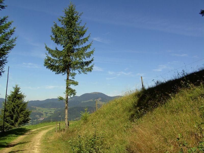 Panoramaweg am Schneckenkopf  © Hartmut Hermanns