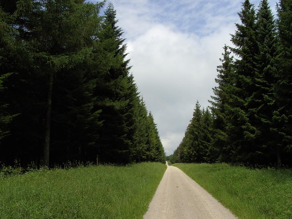 Forstautobahn vor Kaltenbronn  © Hartmut Hermanns