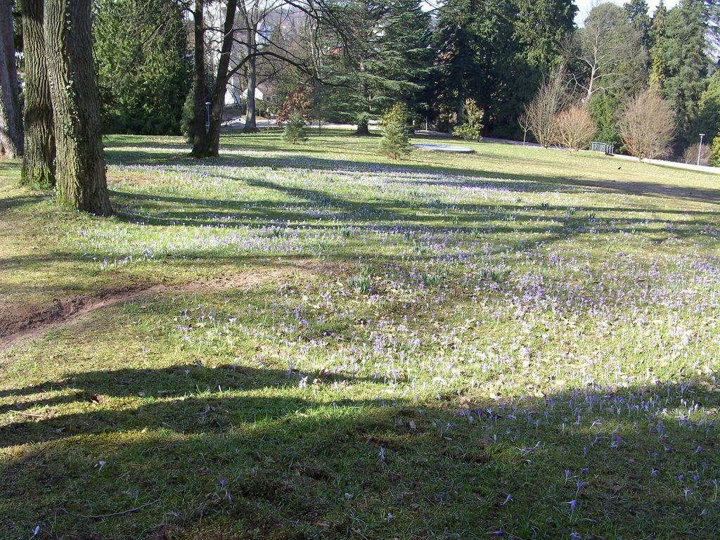 Frühling im Kurpark Badenweiler © Hartmut Hermanns