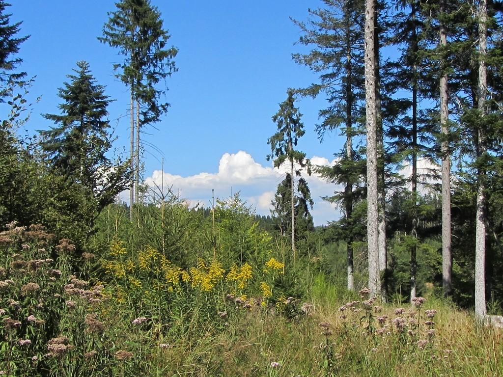 Waldeinsamkeit beim Geißbühl   © Hartmut Hermanns