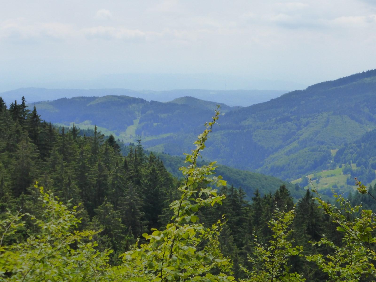 Blick ins Tal der Köhlgartenwiese © Hartmut Hermanns