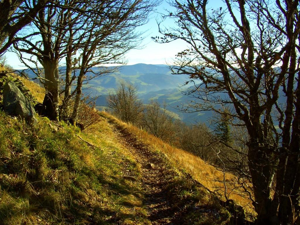 Schmaler steiler Pfad zum Böllener Eck      © Hartmut Hermanns