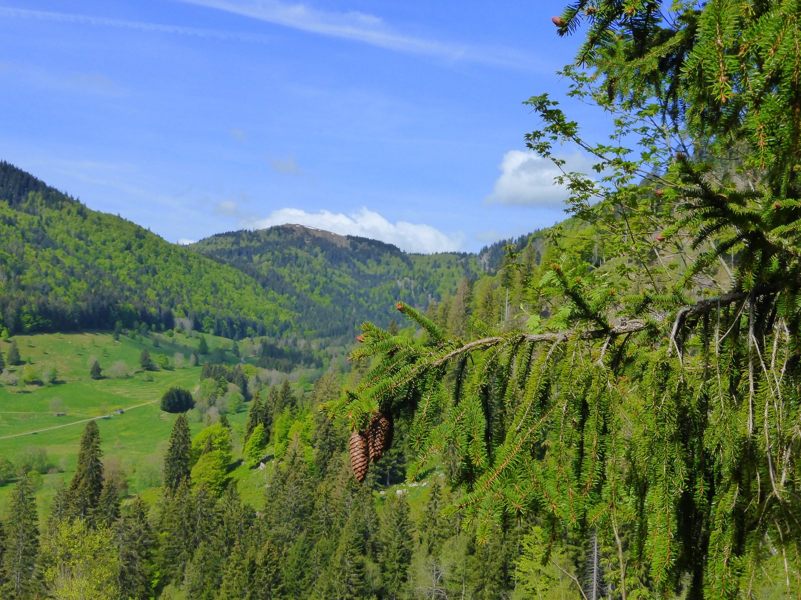 Blick ins Krunkelbachtal mit Herzogenhorn Copyright Hartmut Hermanns
