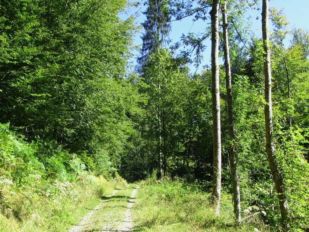 Mischwald auf dem Weg nach Niederdossenbach  © Hartmut Hermanns