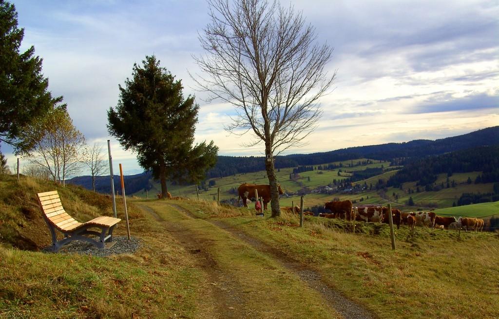 """Chaise longue et troupeau de betail """"Hinterwälder""""   © Hartmut Hermanns"""