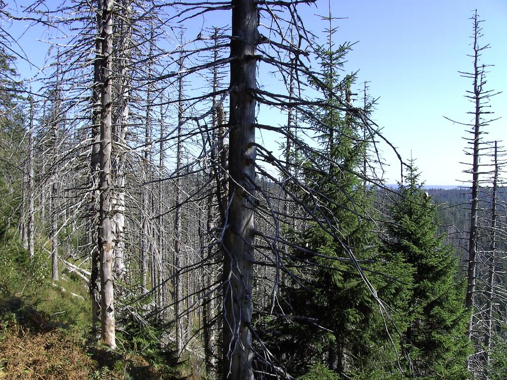Waldzerstörung oberhalb des Wildsees   © Hartmut Hermanns