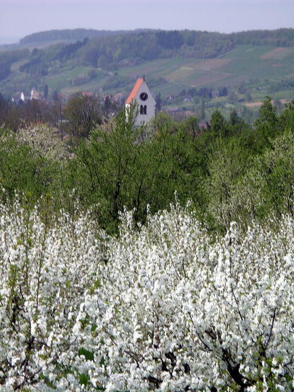 Obereggenen im Blütemnmeer