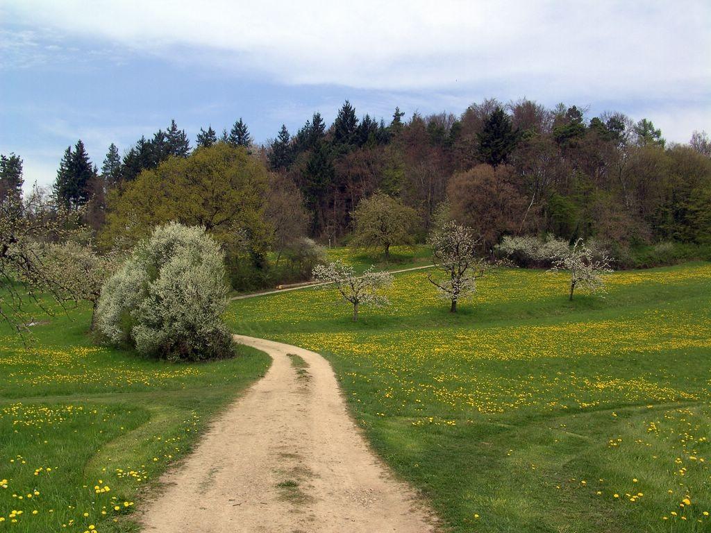 Abschied vom Schwarzwald -kurz vor Kandern   © Hartmut Hermanns