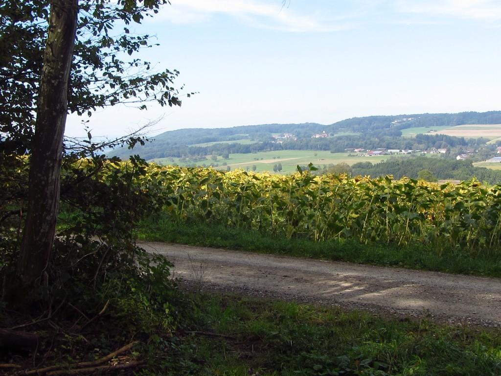 Blick auf Bühl im Klettgau   © Hartmut Hermanns
