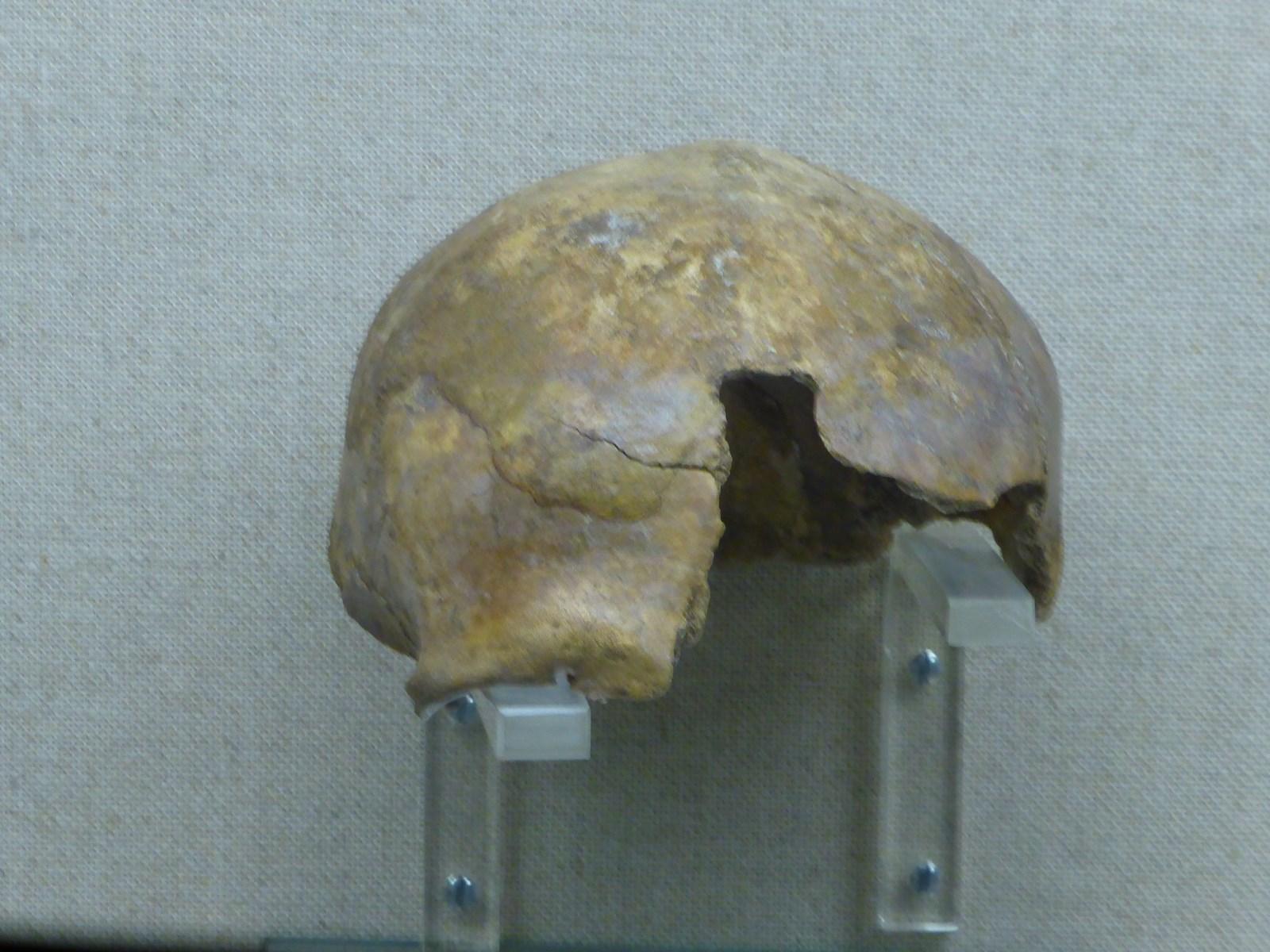 Schädel ca.12000 Jahre