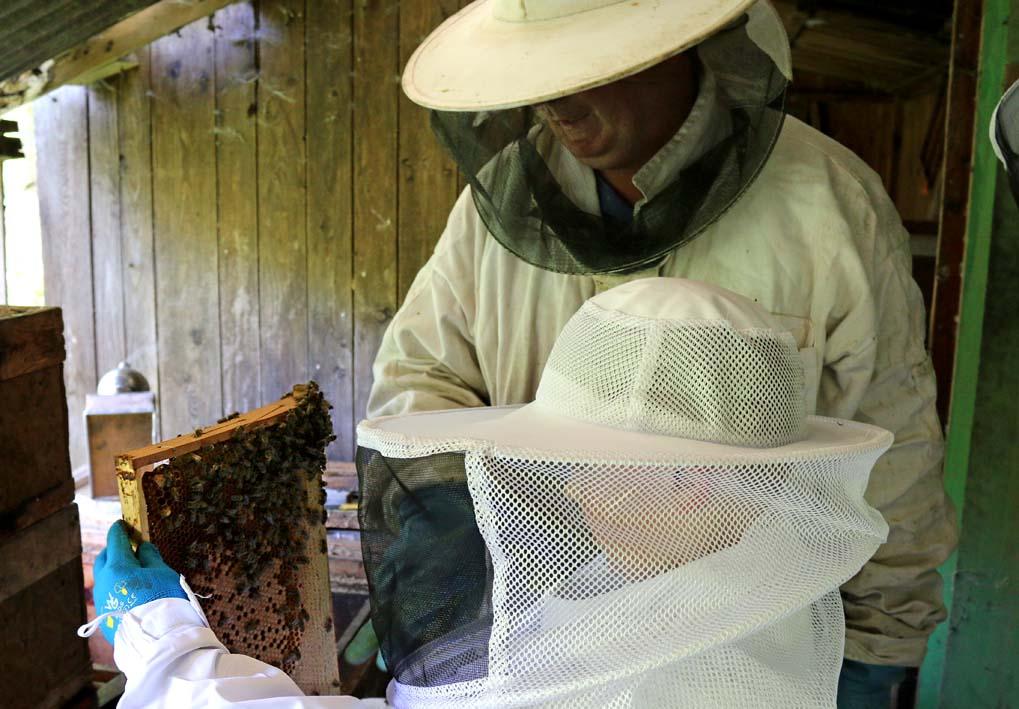 Keine Angst vor stechenden Bienen hat Moritz, mutig hebt er den Rahmen mit Honigwaben samt Bienen aus dem Stock.