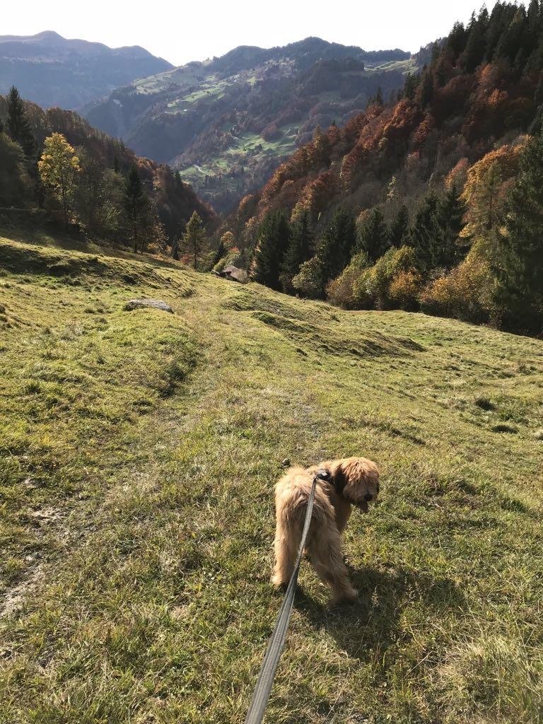 Nico lebt in den Bergen und liebt Kuhfladen :-)