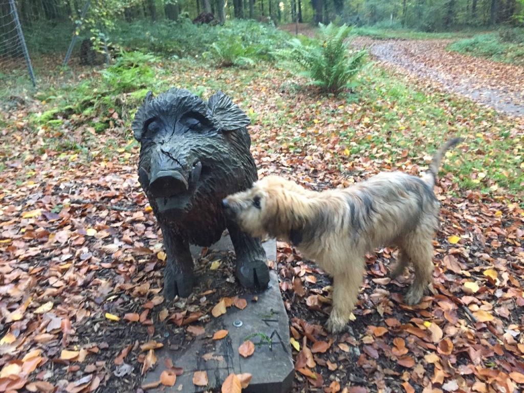 Milo trifft Wildschwein