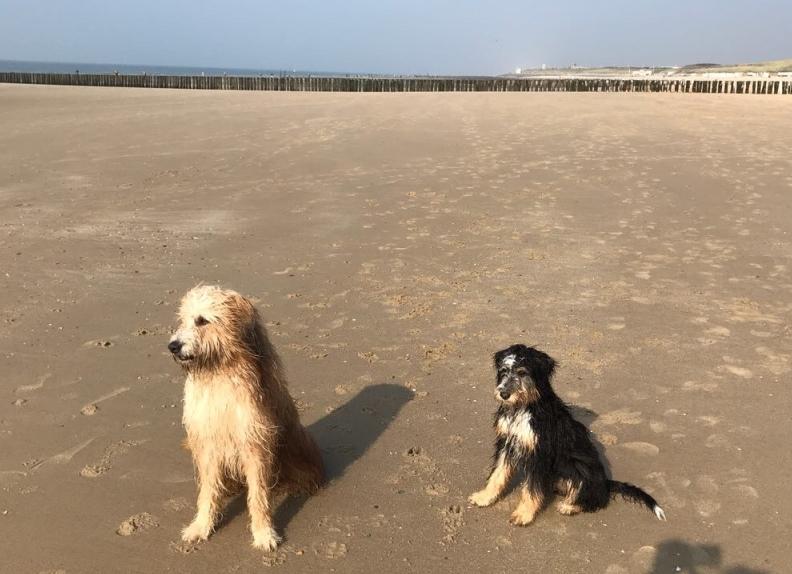 Zwei Hunde und das Meer