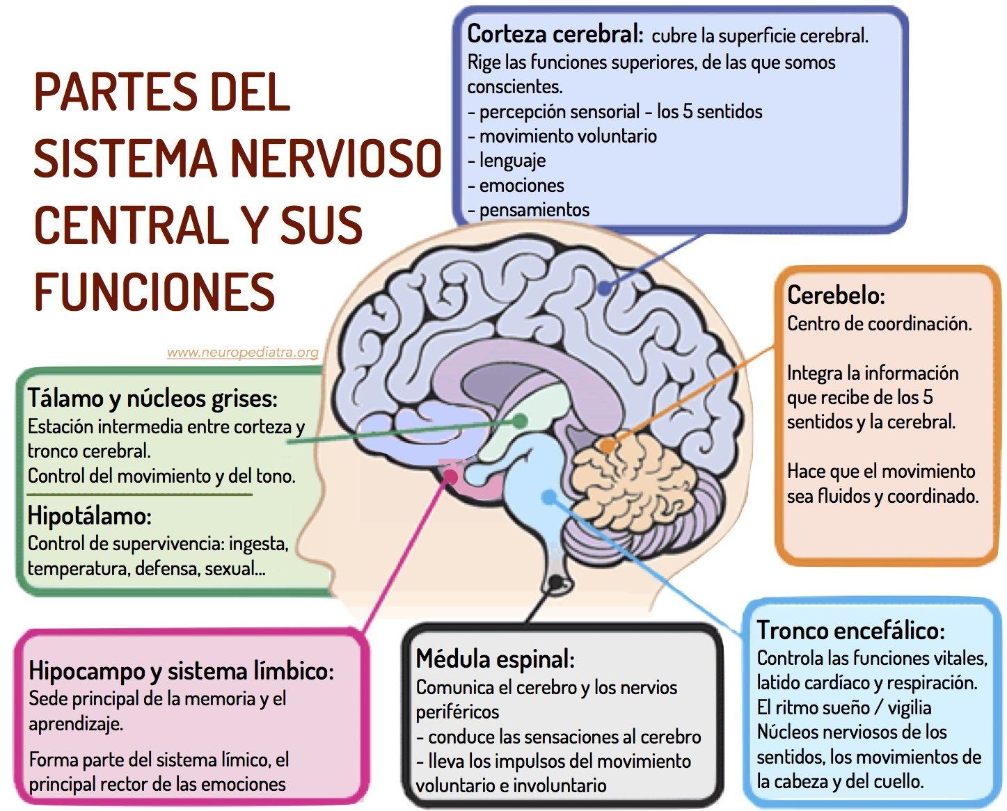 SISTEMAS DEL CUERPO HUMANO - Página web de cienciasnaturalesenlaescuela