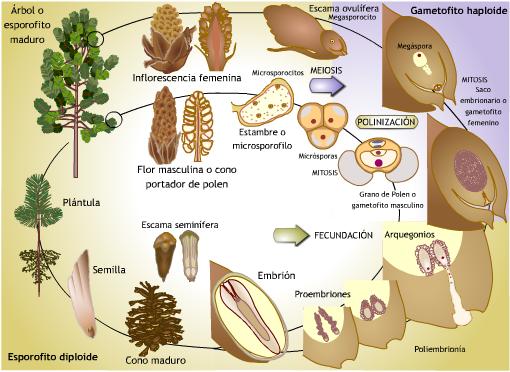 Plantas reproduccion sexualmente