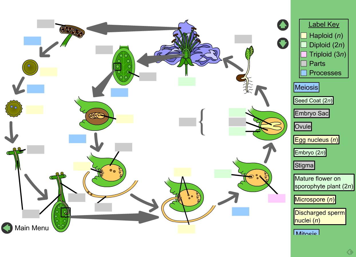 Reproduccion asexual en plantas esquema conceptual