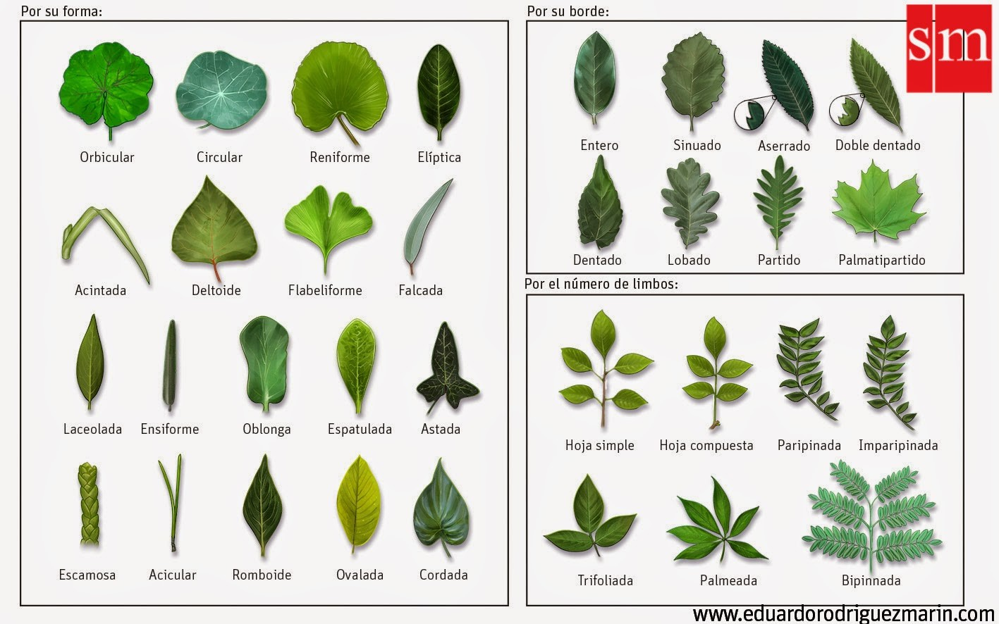 1 etapa observaci n p gina web de for Tipos de arboles y sus caracteristicas