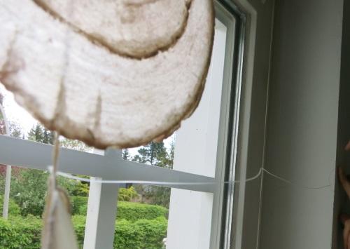 3. ... und festknoten, die Nylonschnur zum Fensterrahmen führen...
