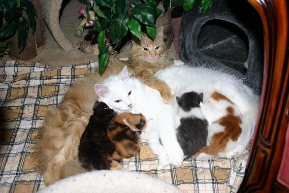 2 Moeders, gezellig samen voor de kittens zorgen