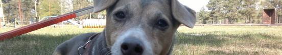 Hundeschulseite von Sabine mit Attila, Idefix & Hexe