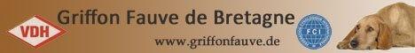 Greta - Griffon Fauve de Bretagne von Sophia Heiduk