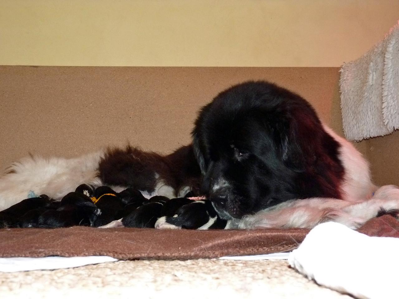 Chippewa et ses bébés ..une grande histoire d'amour !!