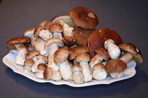 Hongos de Navarra