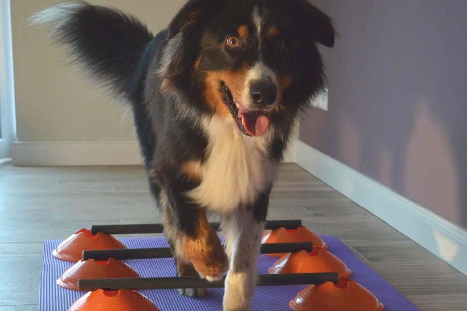 medizinische Trainings Therapie für hunde