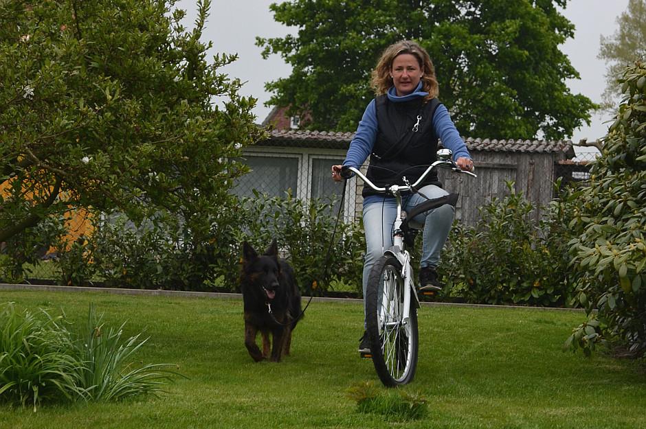 Fahrradtraining, Hund am Rad