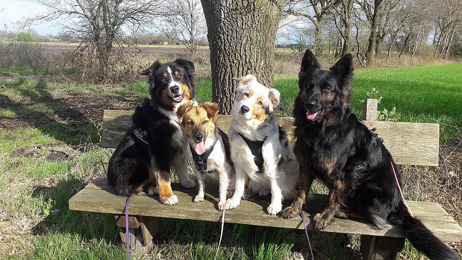 © DER LILA HUND mobile Hundeschule und mehr in und um Harsefeld
