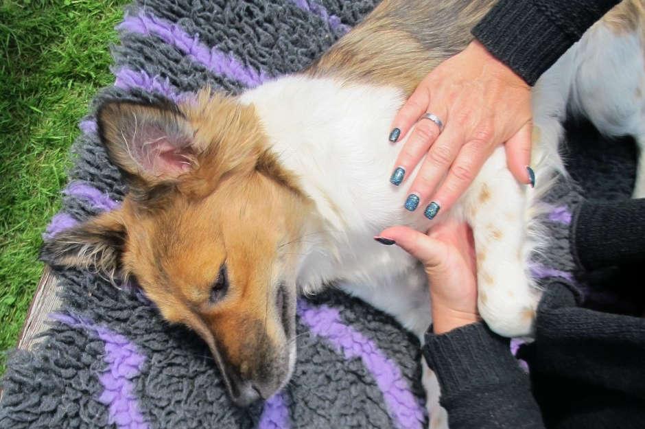 neurologische therapie für hunde