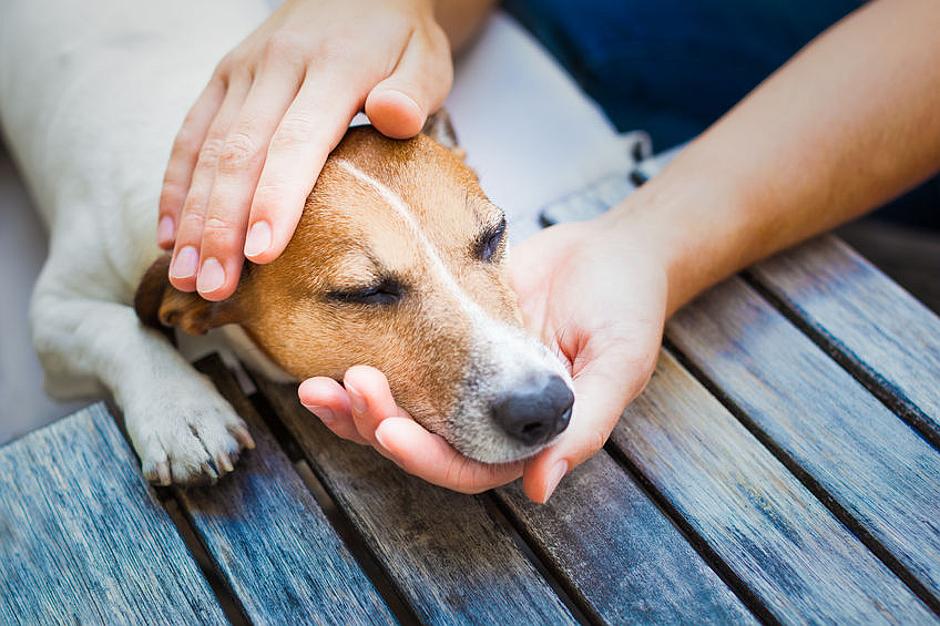 Osteopathie für Hunde bei DER LILA HUND