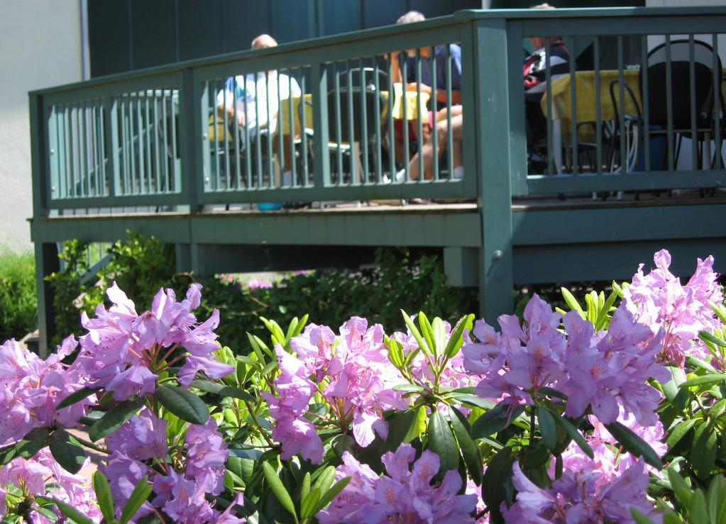 Wenn im Mai der Rhododendron blüht...