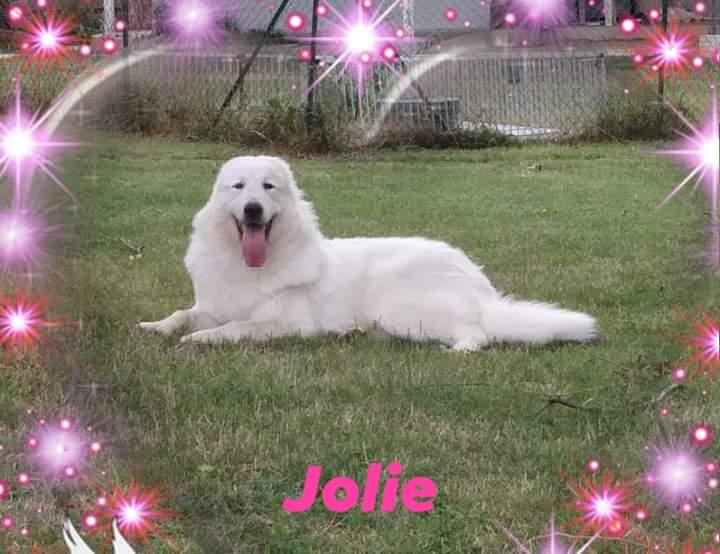 Jolie a 9 mesi