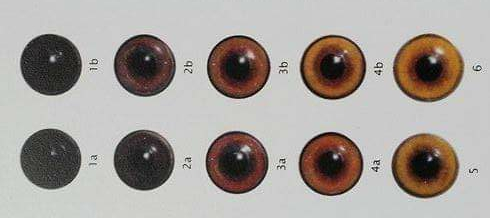 Variabili di colore negli occhi