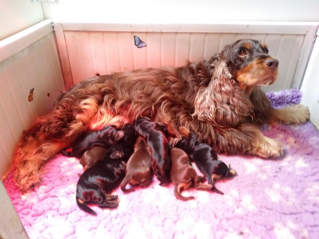 Eccoli in tutta la loro tenerezza, mamma Giuggiola e i suoi cuccioli.