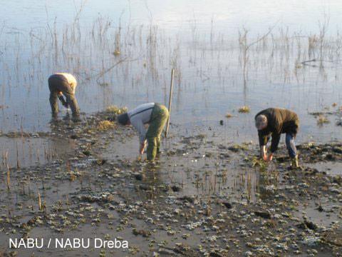 Naturschutzgebiet Dreba-Plothen war Ziel eines Arbeitseinsatzes