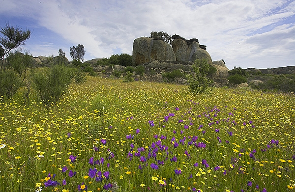 Frühling in der Extremadura
