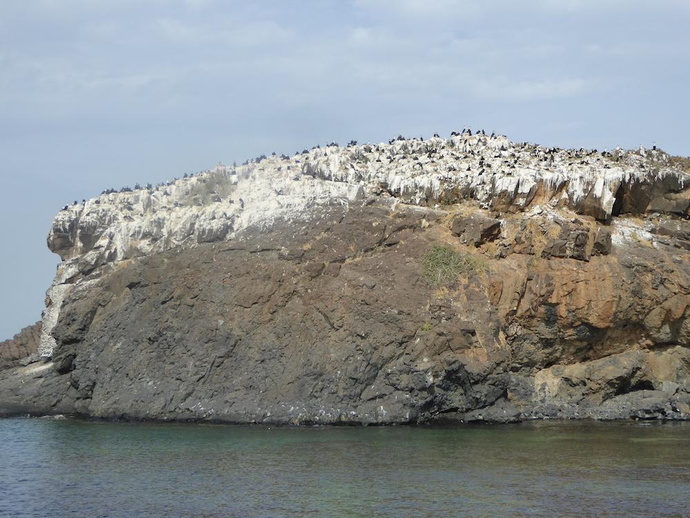 Kormorankolonie auf der Madeleinen-Insel vor Dakar