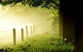 www.ronaldosephius.nl Hek in mist Bewust Groeien vanuit innerlijke kracht