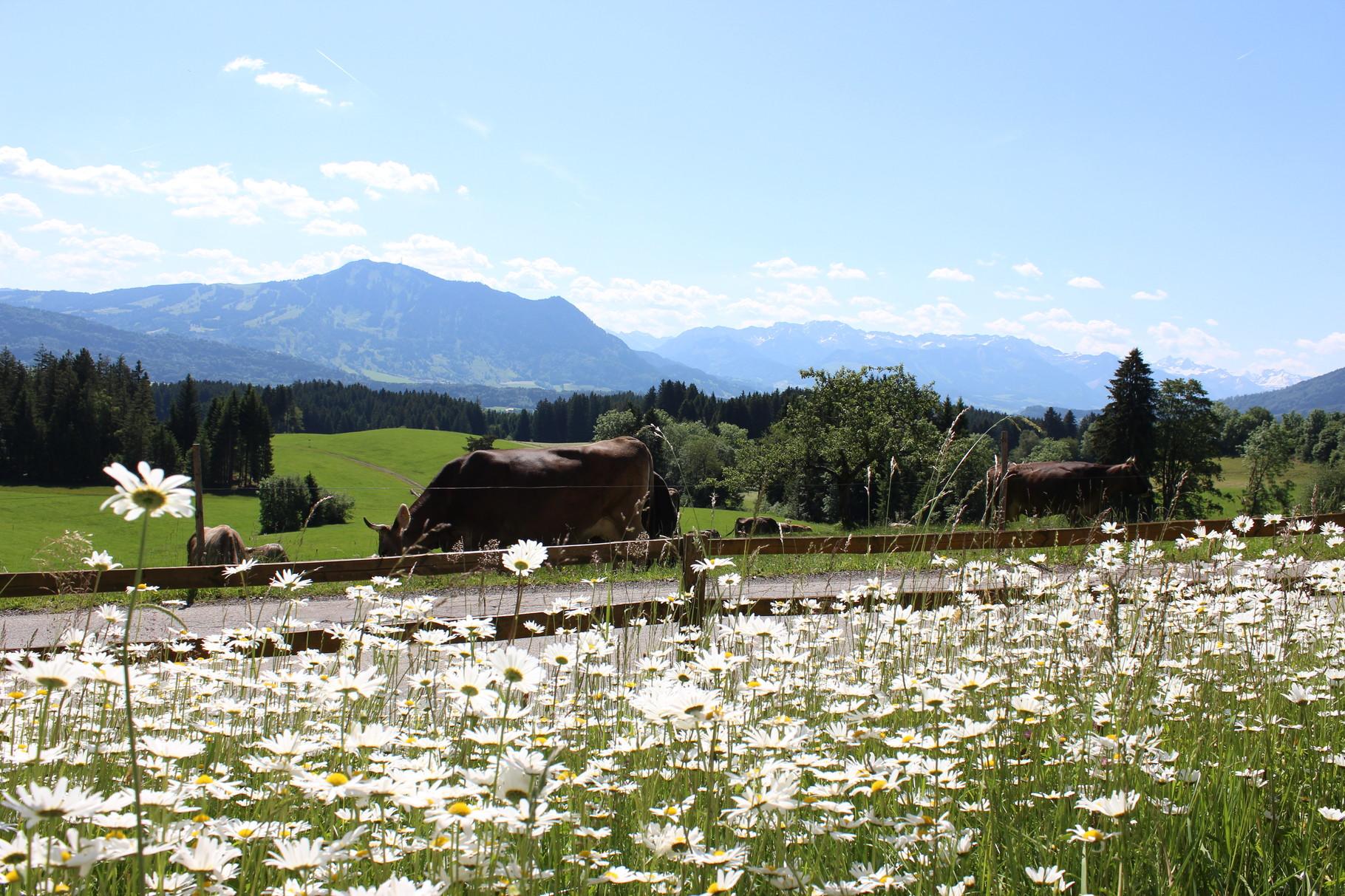 Ihr Panoramablick auf's Allgäu